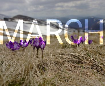 Monthly Blog Round Up – March